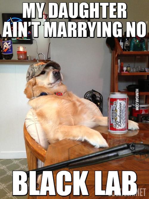 my-daughter-aint-marrying-no-black-lab.jpg