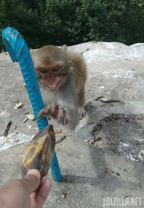 monkey-grab-banana.jpg
